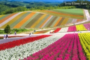 AJIJL JAPAN HOKKAIDO with FLOWER FESTIVAL STAR 8H/6M - 2018: JUN 14  BY: JAPAN AIRLINES