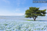 AP2CX - JAPAN KIMONO WITH HITACHI SEASIDE PARK SAVER PLUS 7H/4M - 2018: AUG 23 // OCT 04 BY: CATHAY PACIFIC
